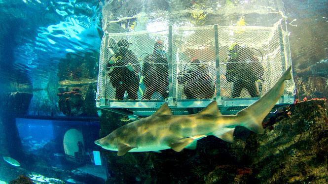 Sumérgete entre tiburones