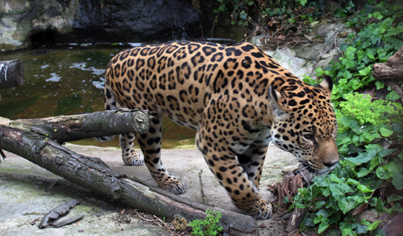 Barcelona Zoo : Zoo Barcelona Related Keywords & Suggestions - Zoo Barcelona Long Tail ...