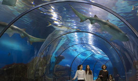 L 39 aqu rium de barcelona visit barcelona tickets for Aquarium de barcelona