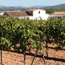 Cata de vino y cava, en dos bodegas catalanas
